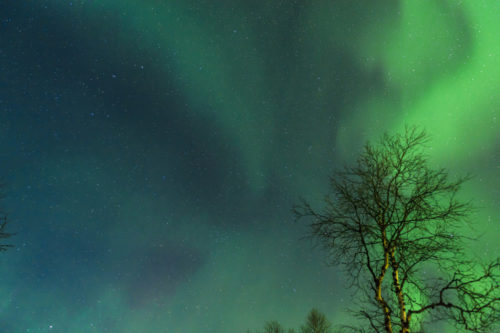 Northern lights above a forest, Finnish Lapland