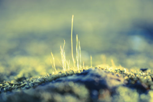 A macro shot of strands of moss on a stone - vibrant colors, surreal looking.