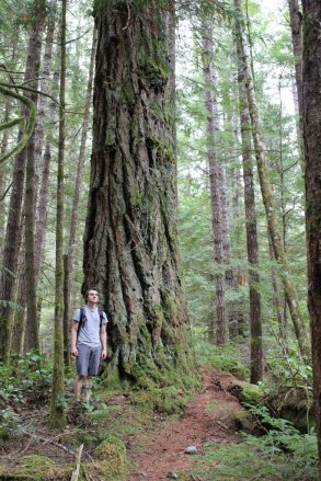 Big trees on the way to Sugarloaf.
