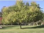 , The Giving Tree, WebEnglish.se