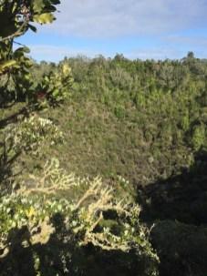 ▲Rangitoto Island 火山口