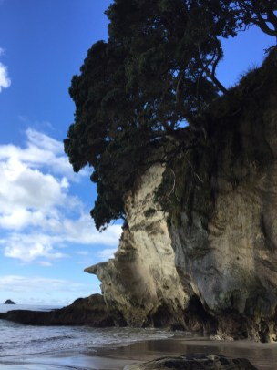 ▲Cathedral Cove
