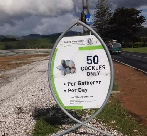 COCKLES 每天每人限制50顆