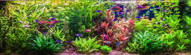 Aquarium einrichten Ratgeber