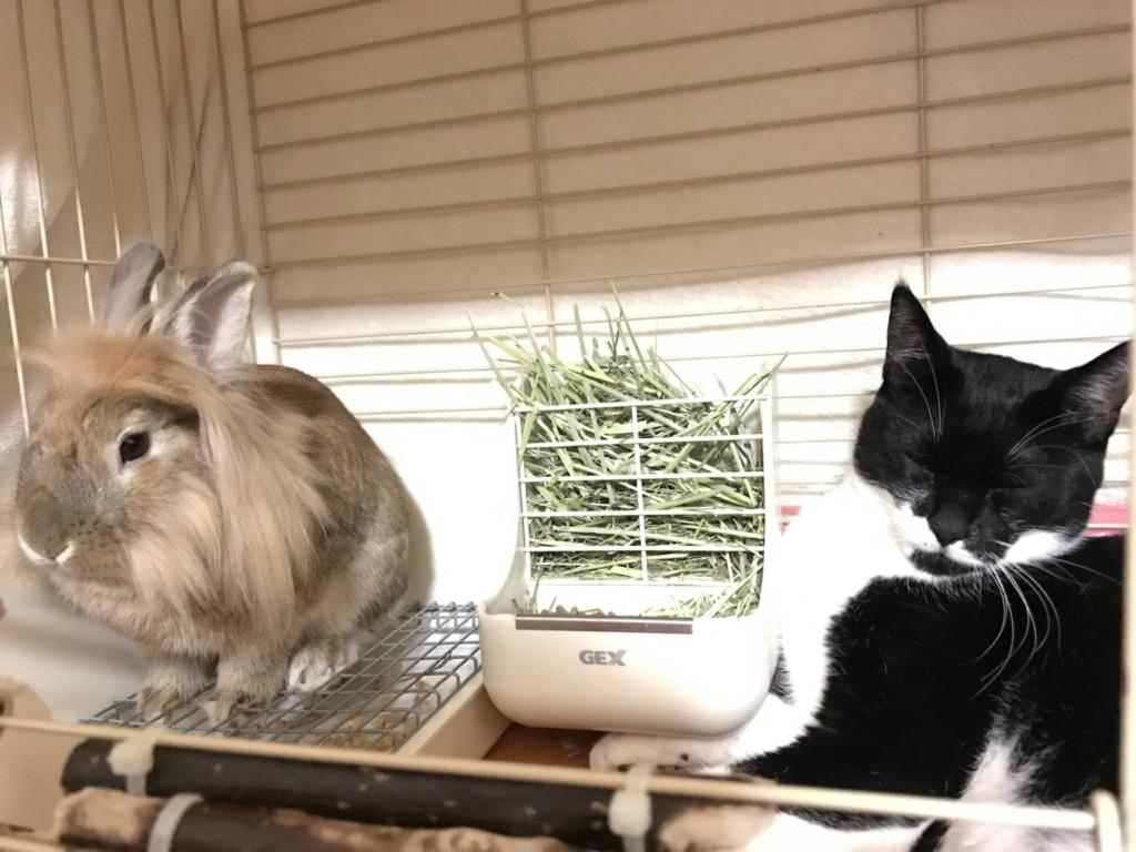 ウサギのケージをDIY / How to Build a Rabbit Condo(1)