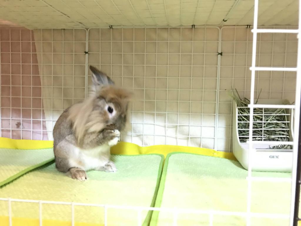 ウサギのケージをDIY / How to Build a Rabbit Condo(3)