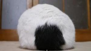 Ice balls cat YouTube 2