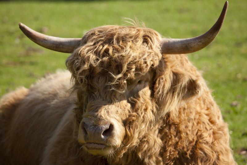 Horns and bull, a succinct summary of this news.
