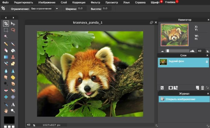 The Best Alternatives to Photoshop and Illustrator 19