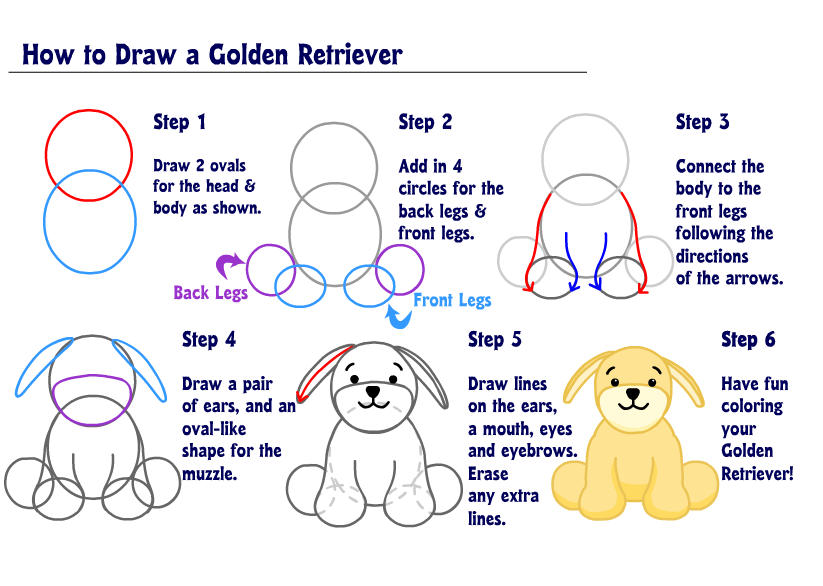 Golden Retriever Drawing Step By Step