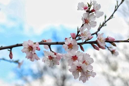Фото распустившихся весенних цветов на ветке