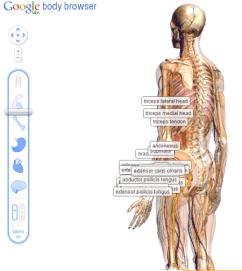 google-body-browser-weblizar-blog
