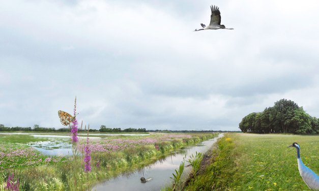 Werkzaamheden water- en natuurplannen in de gemeente Staphorst van start