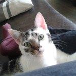 Kat vermist aan de Meidoornlaan Rouveen (Update)