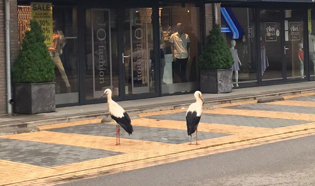 Deze twee 'klanten' wachten tot de winkel open is