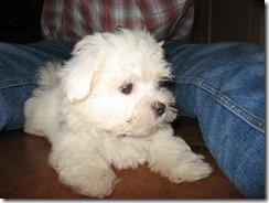 Chico en hij is geboren op 10 februari 2007