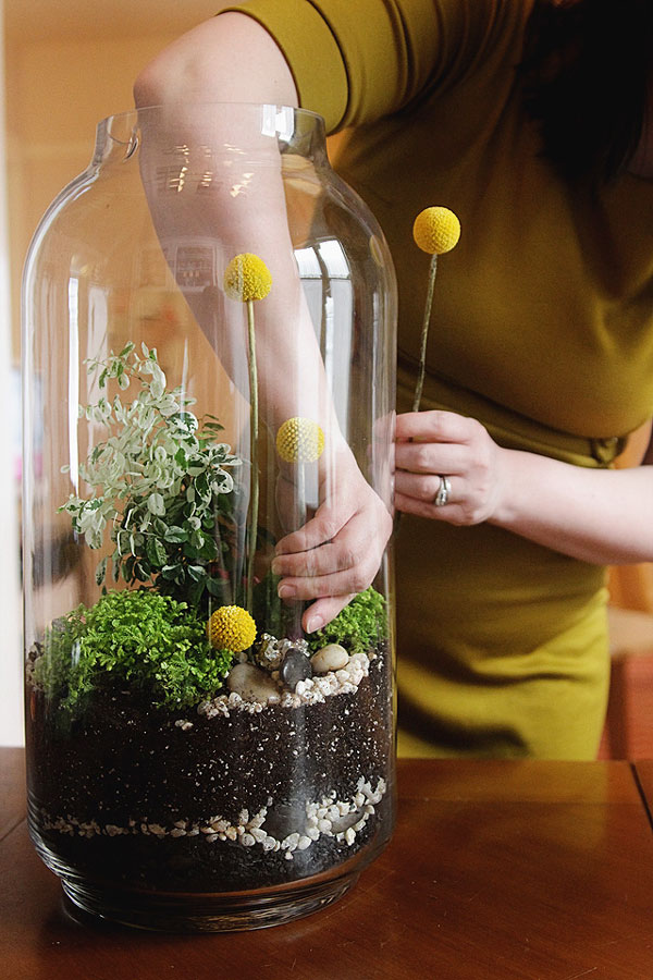 nicole-balch-west-elm-terrarium-mothers-day-diy-project-plant-gift-cute-making-lovely-billy-button-stems