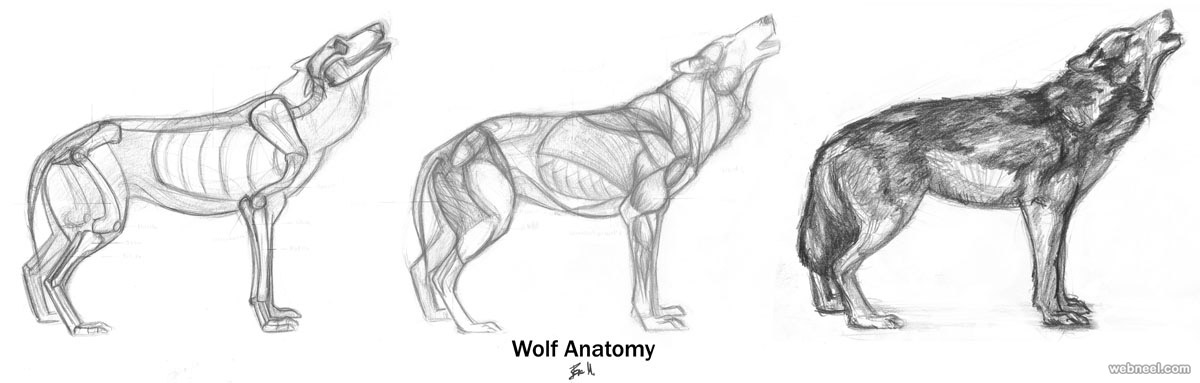 horse skull diagram samsung dvr wiring how to draw animals wolf by ravenclaw 11