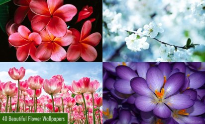 25 Beautiful Flower Wallpapers for your desktop Flower Pictures