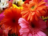 beautiful colorful flowers wallpaper - HD Wallpaper