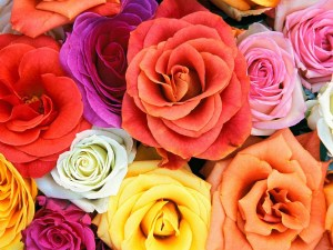 roses flowers colors flower wallpapers rose colorful colour background desktop colored different colours coloured natural rosas 1024 above screen
