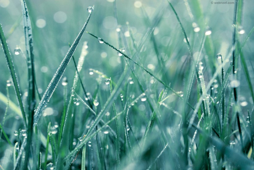 Beautiful Rain Wallpapers For Mobile The Best Hd Wallpaper