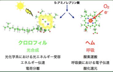 Introduction - 植物代謝システ...