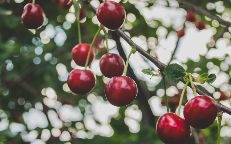 Natuurpunt Waasland fruitbomen