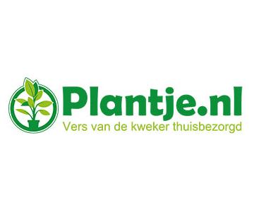 Goedkoop kamerplanten online bestellen via Plantje.nl