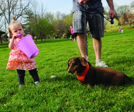 MEGAN FAVIGNANO / The Journal Payton walks through Larson Park in Webster Groves with her parents and dachshund dog, Buster. Buster searched the park for Easter eggs at Webster Groves' annual dog Easter egg hunt.