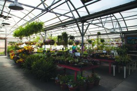 MARY MASURAT / The Journal Rolling Ridge Nursery is located at 60 N Gore Ave., St. Louis, MO. 63119.
