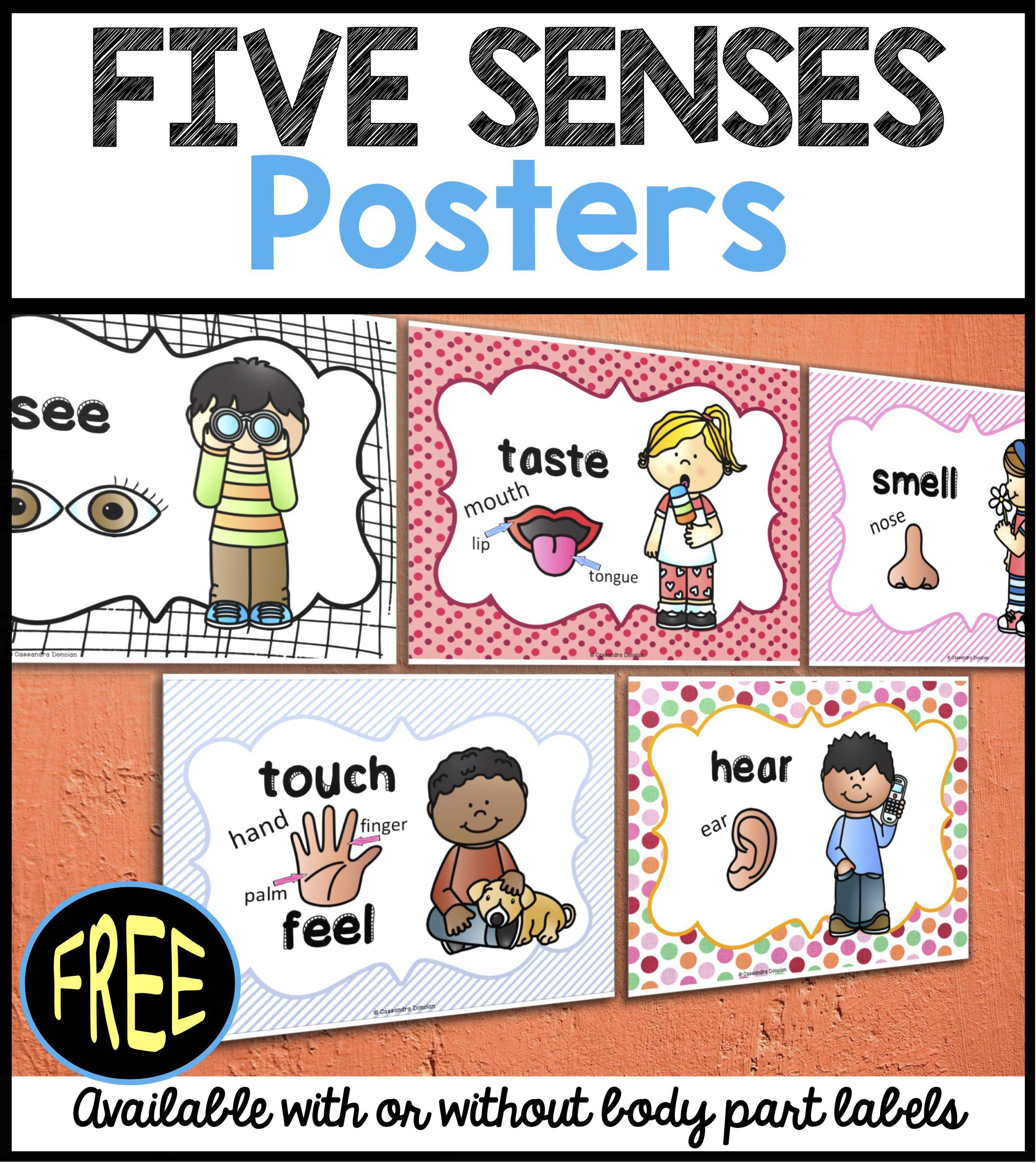 5 Senses Clipart Labeling 5 Senses Labeling Transparent