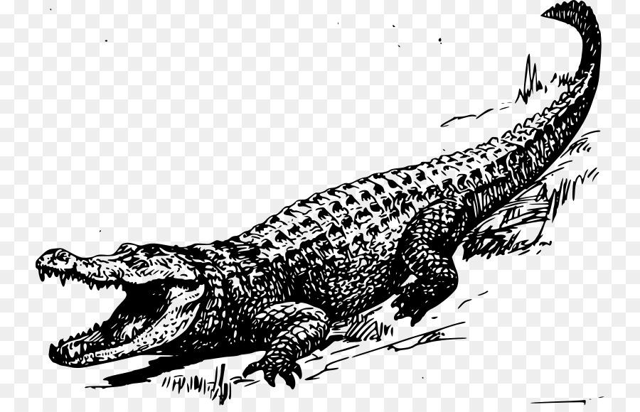 Alligator clipart swamp, Alligator swamp Transparent FREE