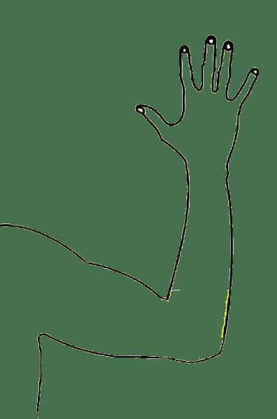 Arm clipart arm outline, Arm arm outline Transparent FREE