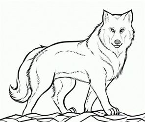 Babies clipart wolf Babies wolf Transparent FREE for download on WebStockReview 2020