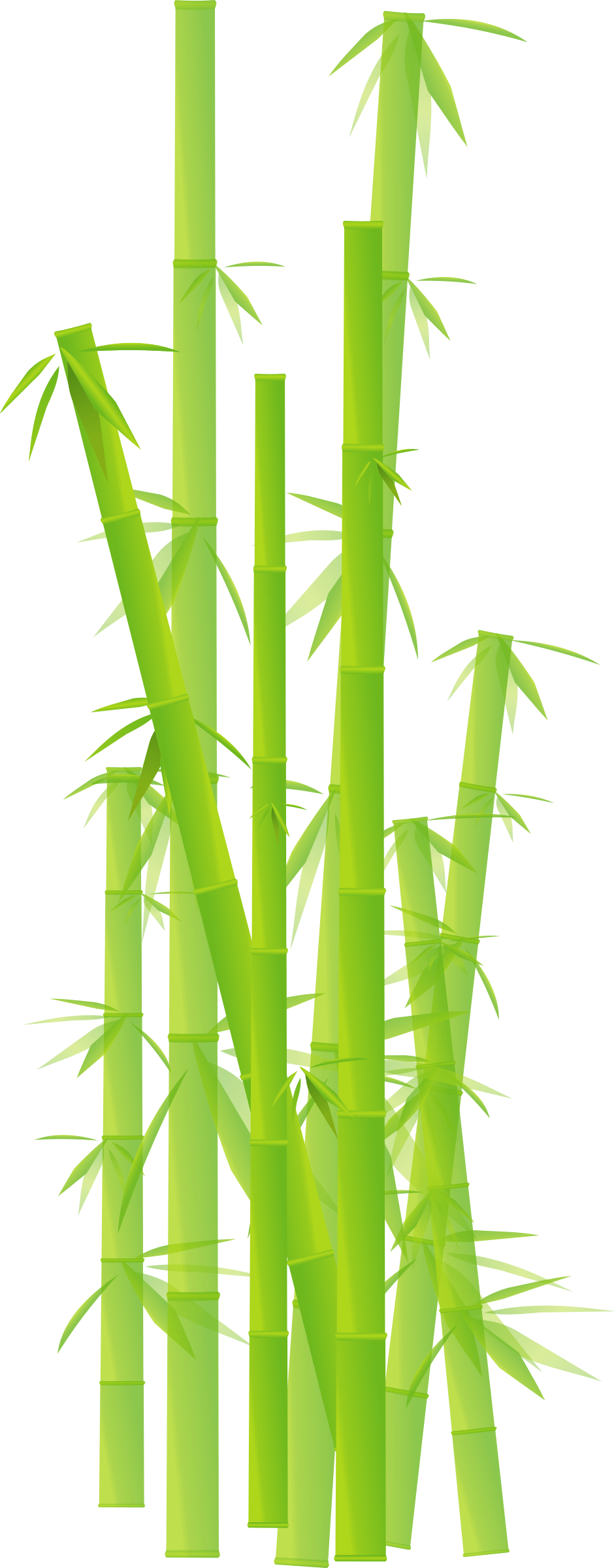Bamboo clipart Bamboo Transparent FREE for download on