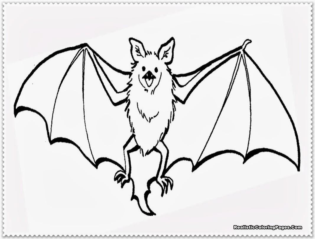 Bat Clipart Realistic Bat Realistic Transparent Free For
