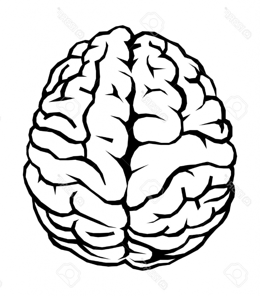 hight resolution of brain clipart simple drawing profile pencil and