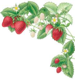 bushes clipart strawberry collection of bush [ 900 x 931 Pixel ]