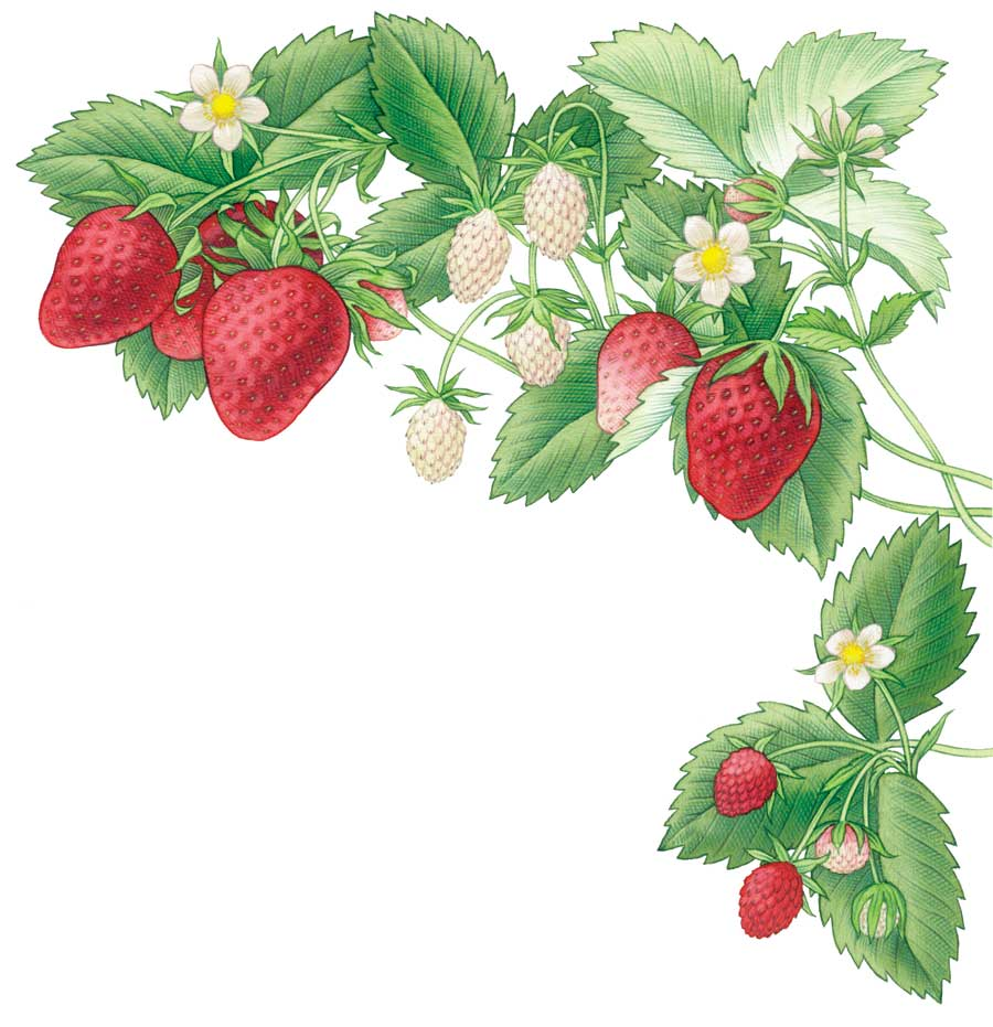 hight resolution of bushes clipart strawberry collection of bush