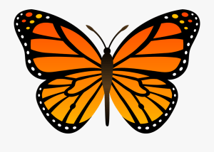 butterfly monarch clipart butterflies easy drawing outline abstract clip cliparts webstockreview sea clipground library