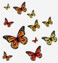 Butterflies clipart transparent background Butterflies transparent background Transparent FREE for download on WebStockReview 2020