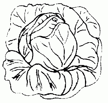 Cabbage clipart black and white, Cabbage black and white