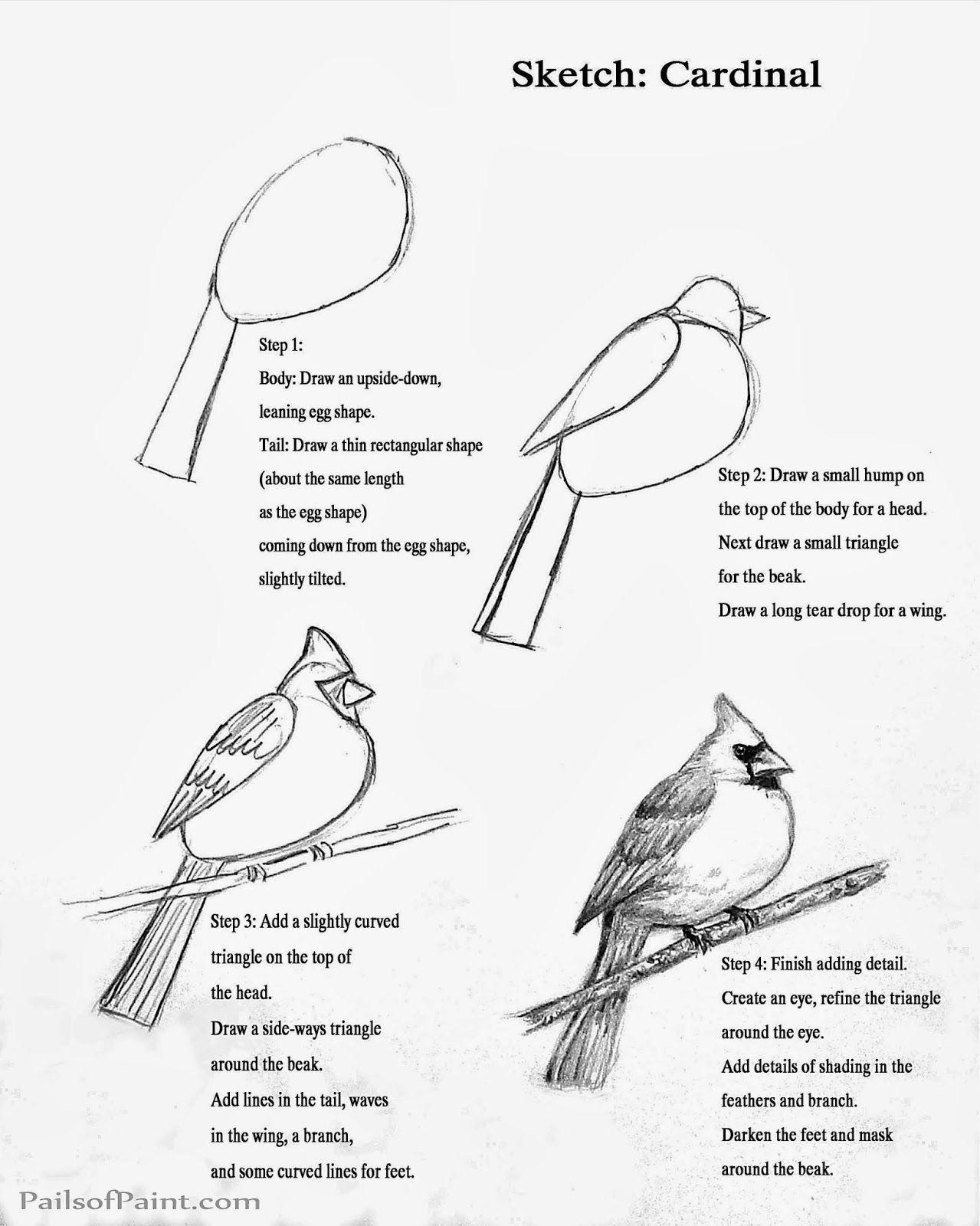 Cardinal Clipart Line Drawing Cardinal Line Drawing