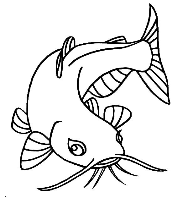 Catfish clipart coloring page, Catfish coloring page