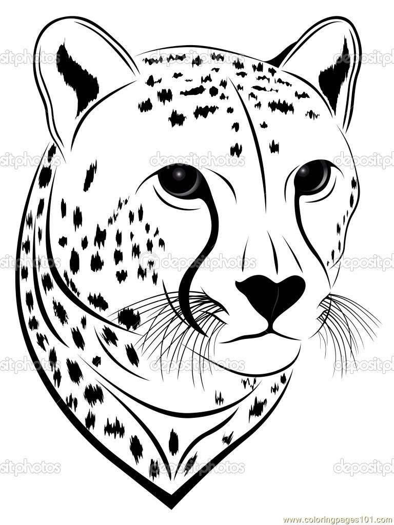 Cheetah clipart coloring, Cheetah coloring Transparent