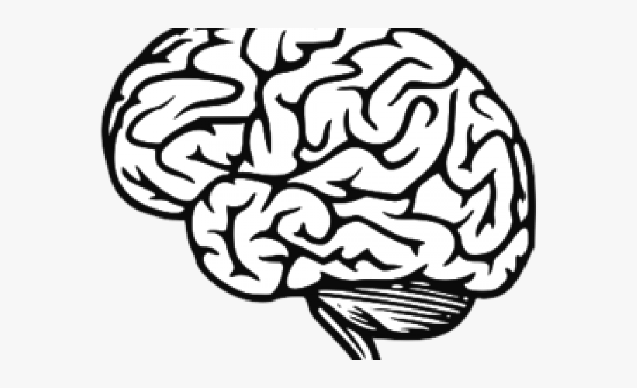 Clipart brain jpeg, Clipart brain jpeg Transparent FREE