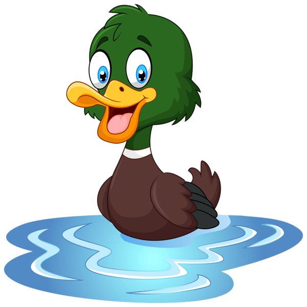 clipart swimming duck