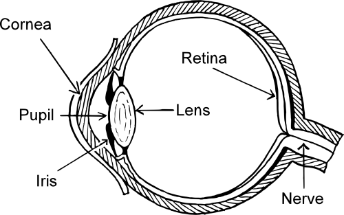 small resolution of eye by firkin free images to print nose clipart diagram