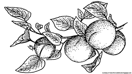 Clipart fruit black and white Clipart fruit black and white Transparent FREE for download on WebStockReview 2020